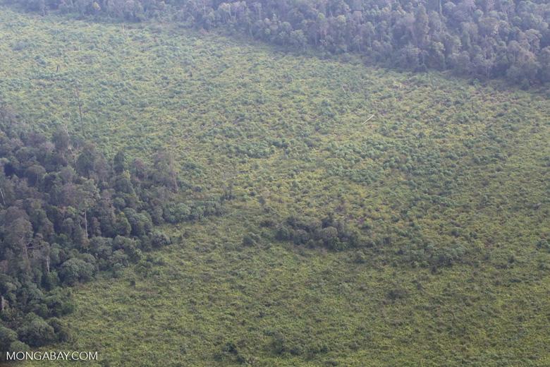 Forest clearing in Riau [riau_5324]