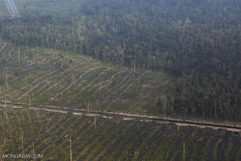 Peatlands destruction in Riau [riau_5343]