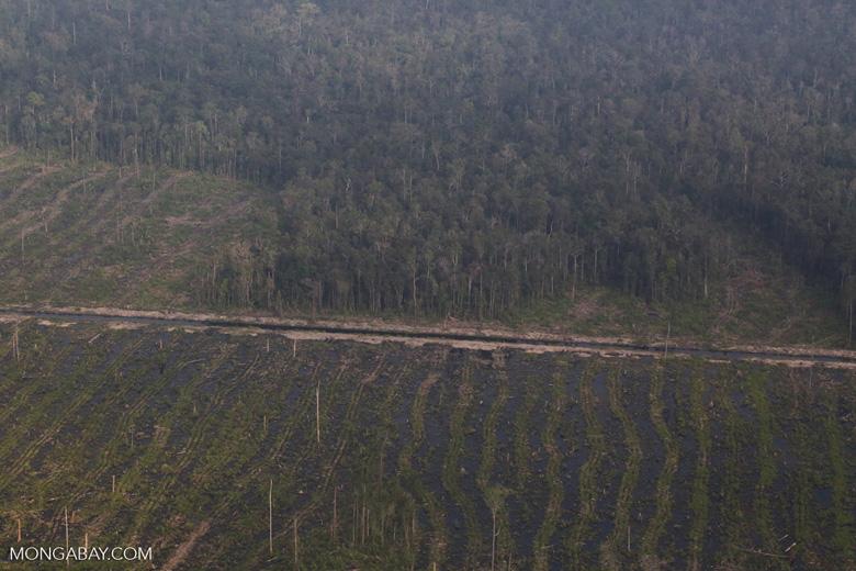 Peatlands destruction in Riau [riau_5345]