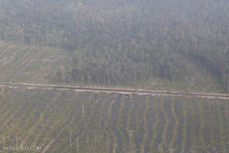 Peatlands destruction in Riau [riau_5346]