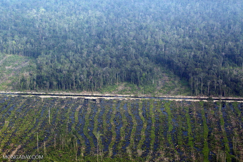 Peatlands destruction in Riau [riau_5347]
