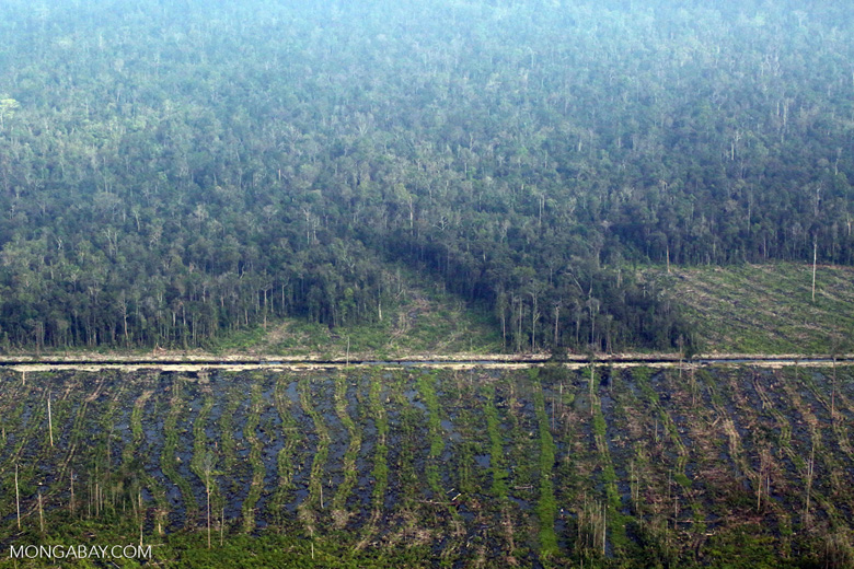 Peatlands destruction in Riau [riau_5349]
