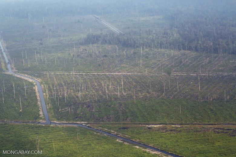 Peatlands destruction in Riau [riau_5350]