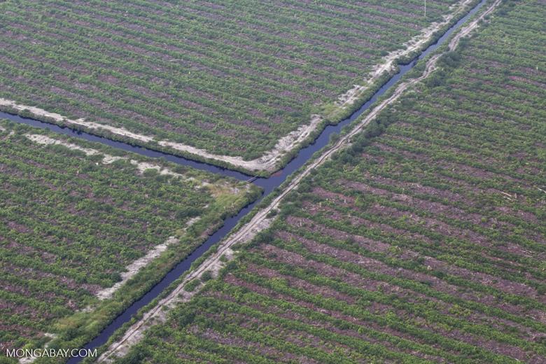 Peatlands destruction in Riau [riau_5354]