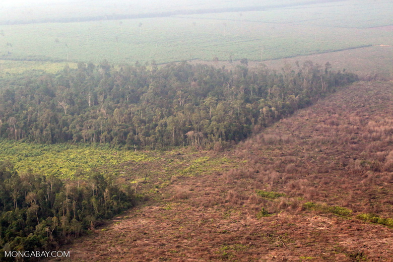 Burned over forest in Riau