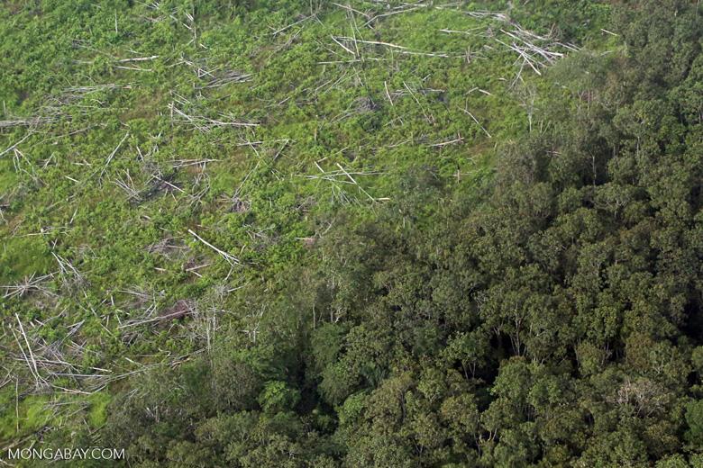 Forest clearing in Riau [riau_5367]