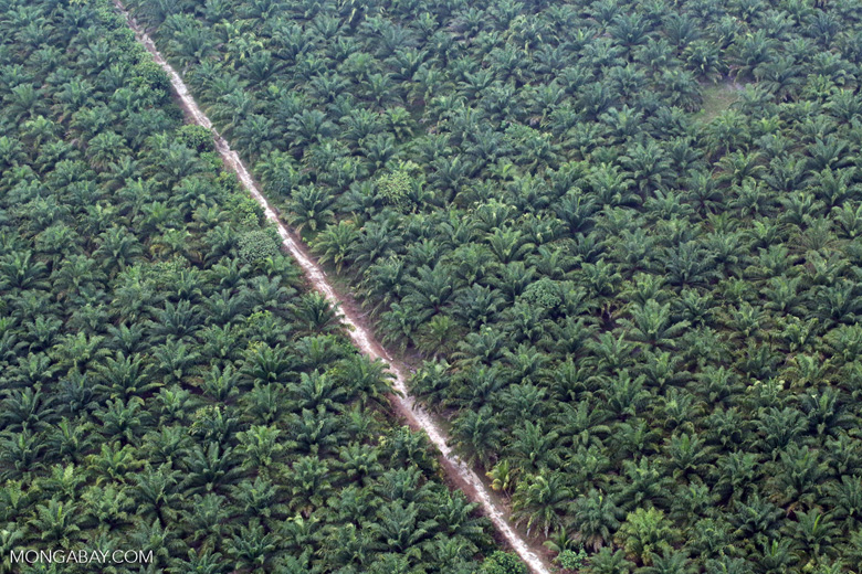 Oil palm plantation in Riau [riau_5376]