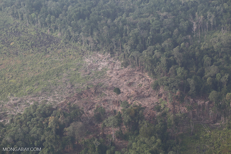 Forest clearing for oil palm [riau_5386]