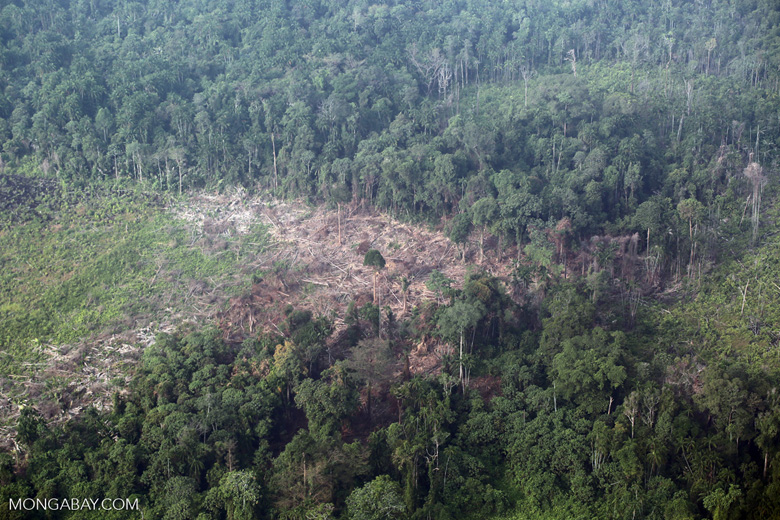 Forest clearing for oil palm [riau_5394]