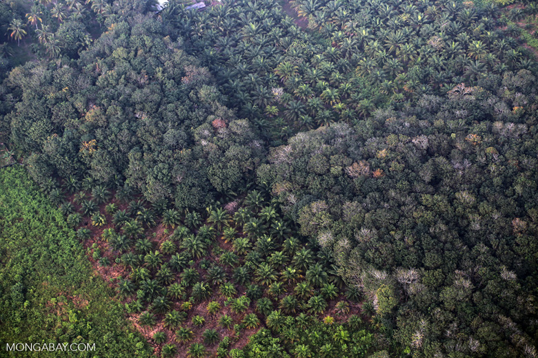 Forest and oil palm