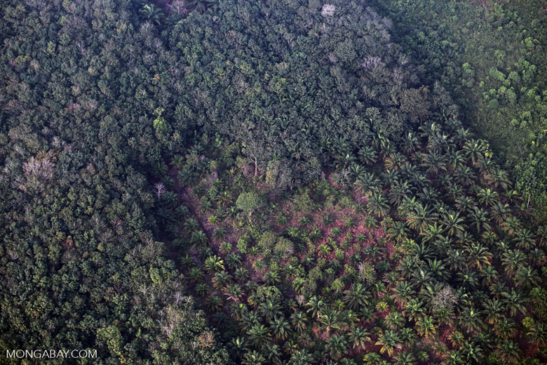 Forest and oil palm [riau_5401]