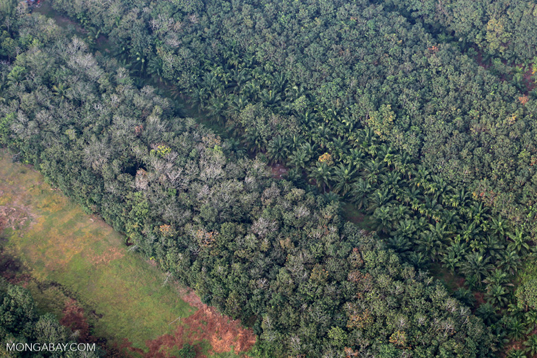 Oil palm, rice, and agroforest in Riau