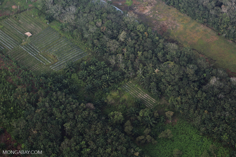 Oil palm, rice, and agroforest in Riau [riau_5412]