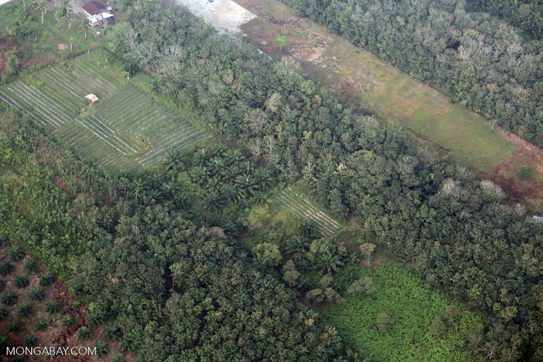 Oil palm, rice, and agroforest in Riau [riau_5413]