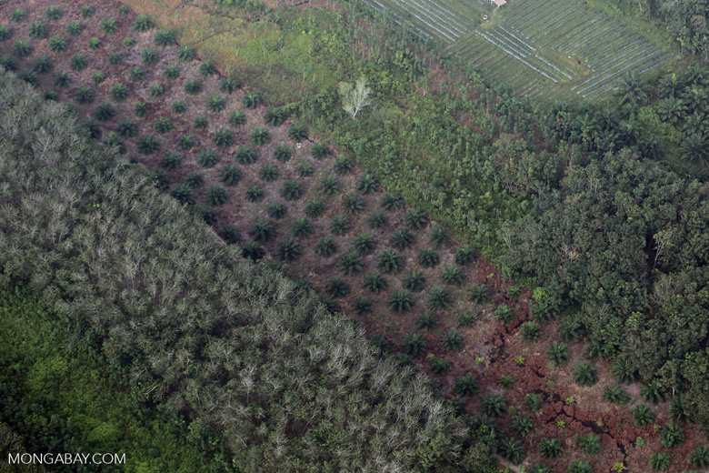 Oil palm, rice, and agroforest in Riau [riau_5414]