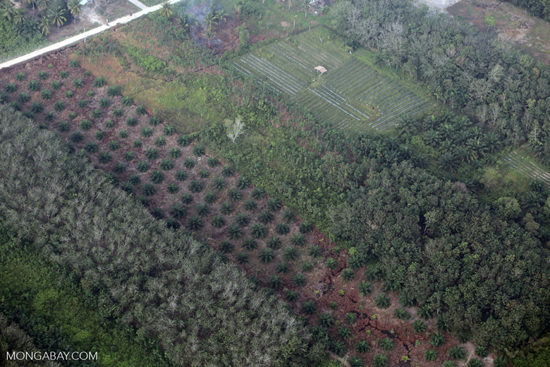 Oil palm, rice, and agroforest in Riau [riau_5416]