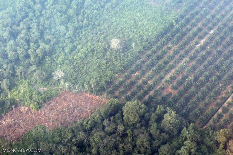 Oil palm and rainforest in Riau [riau_5422]
