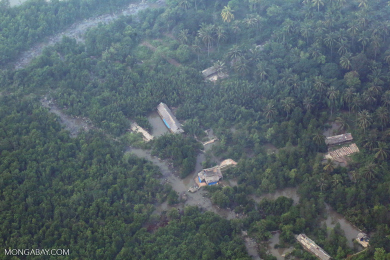 Oil palm and rainforest in Riau [riau_5425]