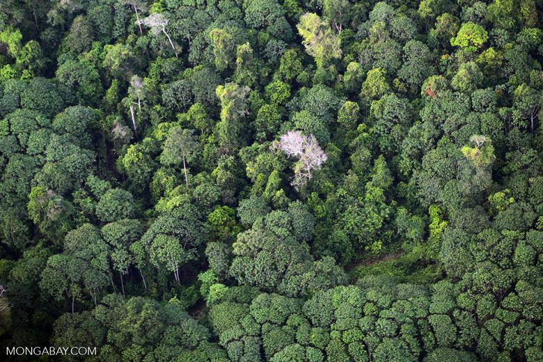 Rainforest and jungle rubber in Sumatra [riau_5439]