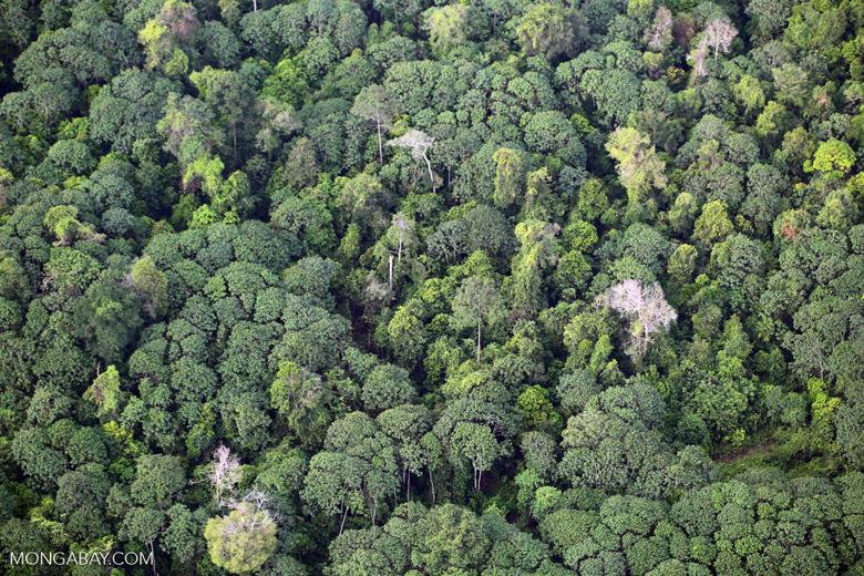 Rainforest and jungle rubber in Sumatra [riau_5446]