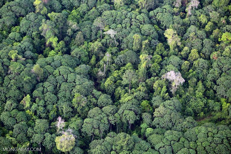 Rainforest and jungle rubber in Sumatra [riau_5447]