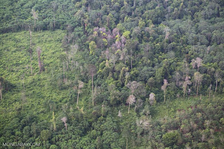 Forest clearing in Riau [riau_5451]