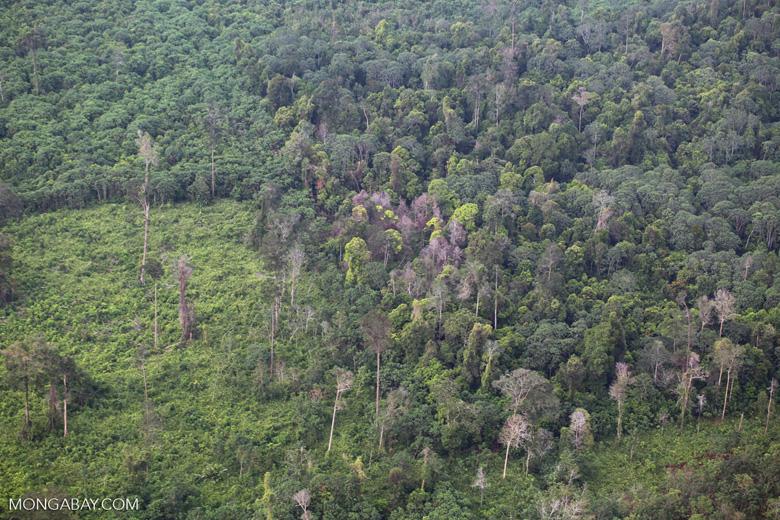 Forest clearing in Riau [riau_5452]
