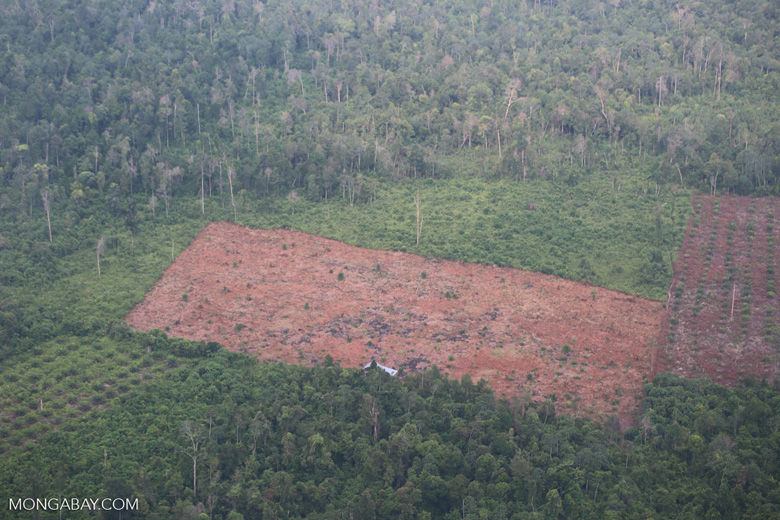 Deforestation for oil palm development [riau_5454]