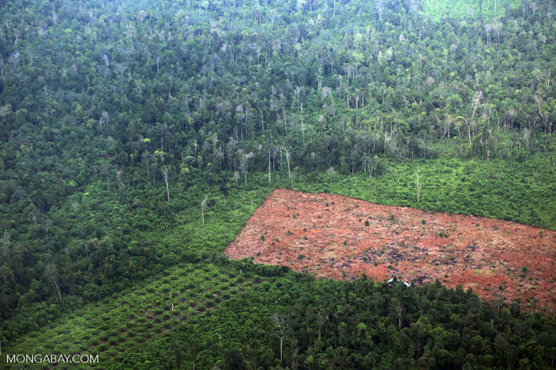 Deforestation for oil palm development