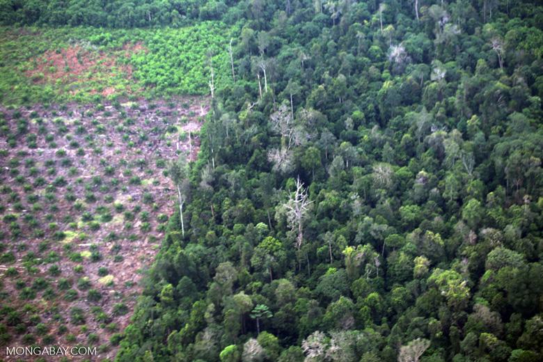 Deforestation for oil palm development [riau_5458]