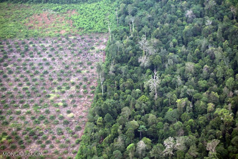 Deforestation for oil palm development [riau_5460]