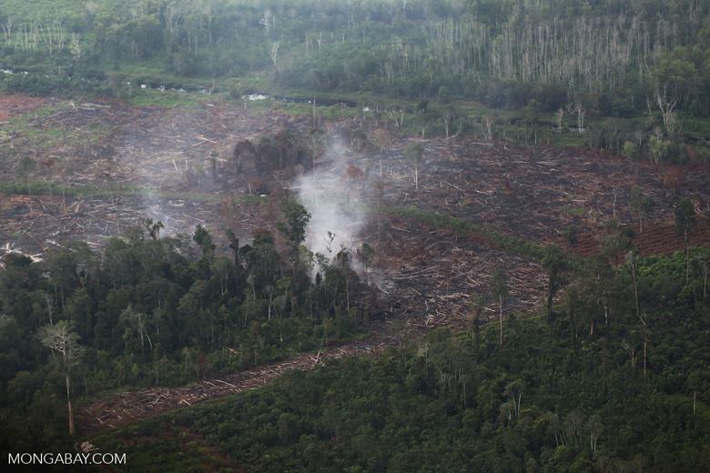 Peat fire in Riau [riau_5461]