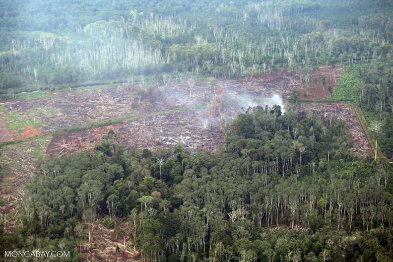 Peat fire in Riau [riau_5469]
