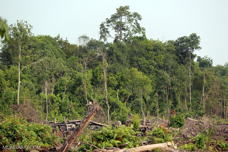 Peatlands destruction [riau_5478]