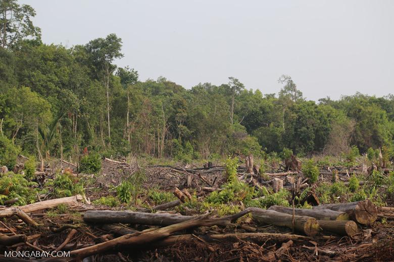 Peatlands destruction [riau_5481]