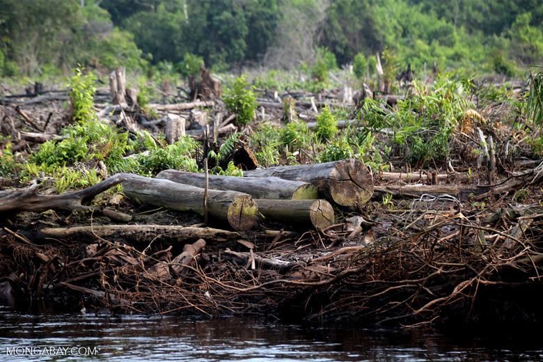 Peatlands destruction