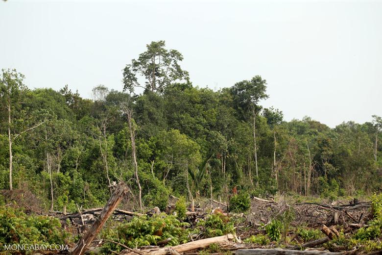 Peatlands destruction [riau_5487]