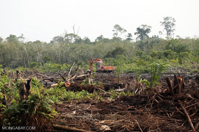 Peatlands destruction [riau_5490]