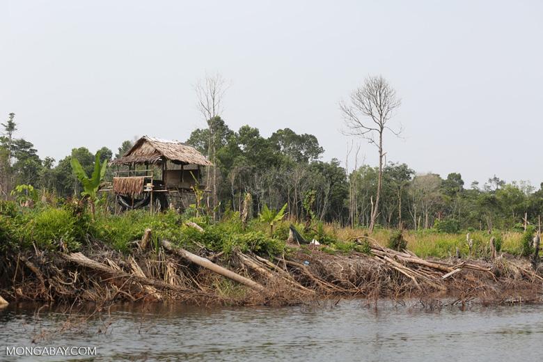 Community deforestation in Riau