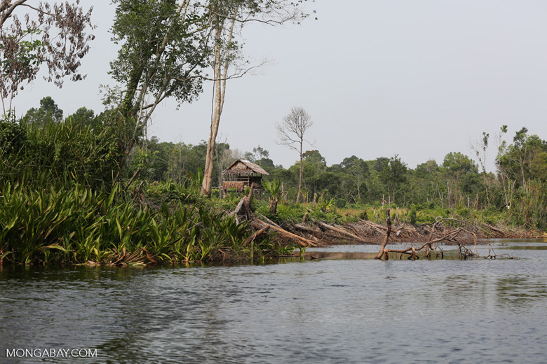 Community deforestation in Riau [riau_5500]
