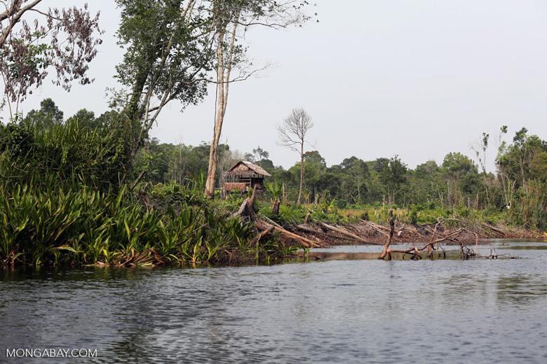 Community deforestation in Riau [riau_5501]