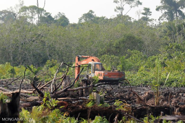 Excavator clearing peatland