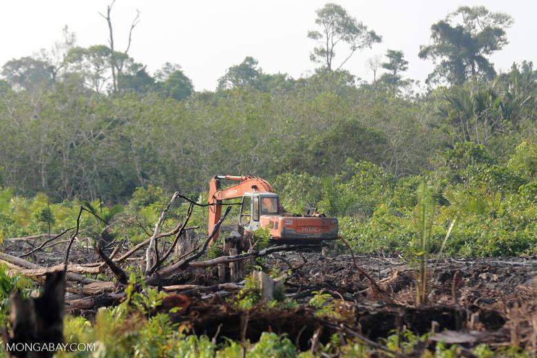 Excavator clearing peatland [riau_5557]