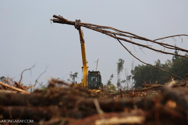 Excavator working in an acacia plantation [riau_5572]
