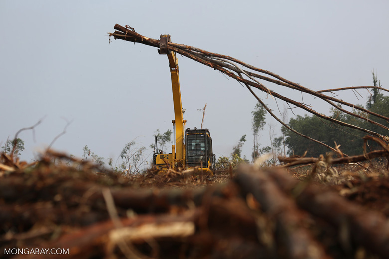 Excavator working in an acacia plantation