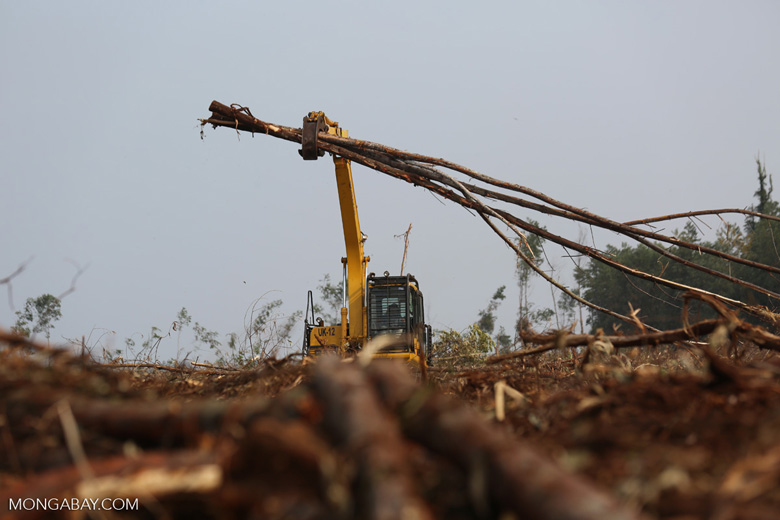 Excavator working in an acacia plantation [riau_5574]