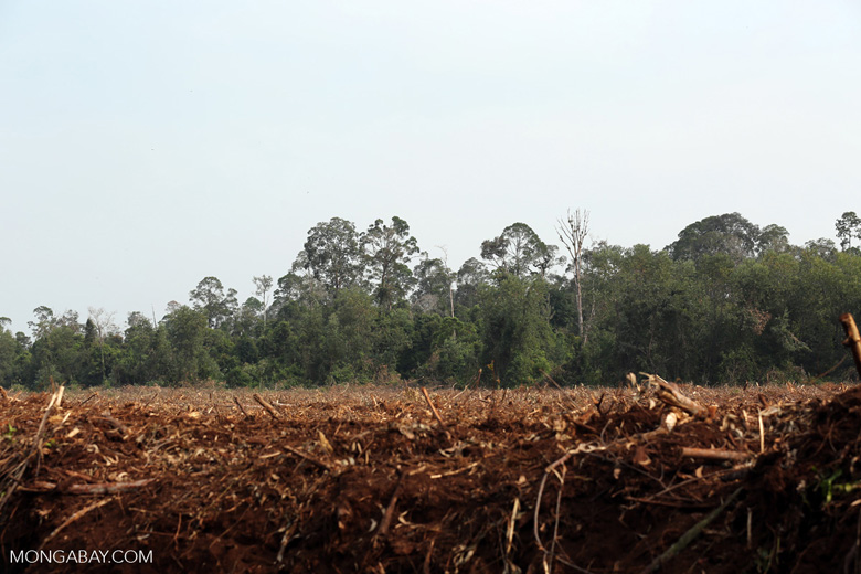 Cleared peatland with rainforest in the background [riau_5592]