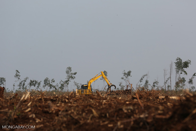 Excavators working in an acacia plantation