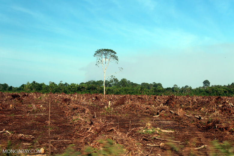 Forest cleared for palm oil production [riau_5915]