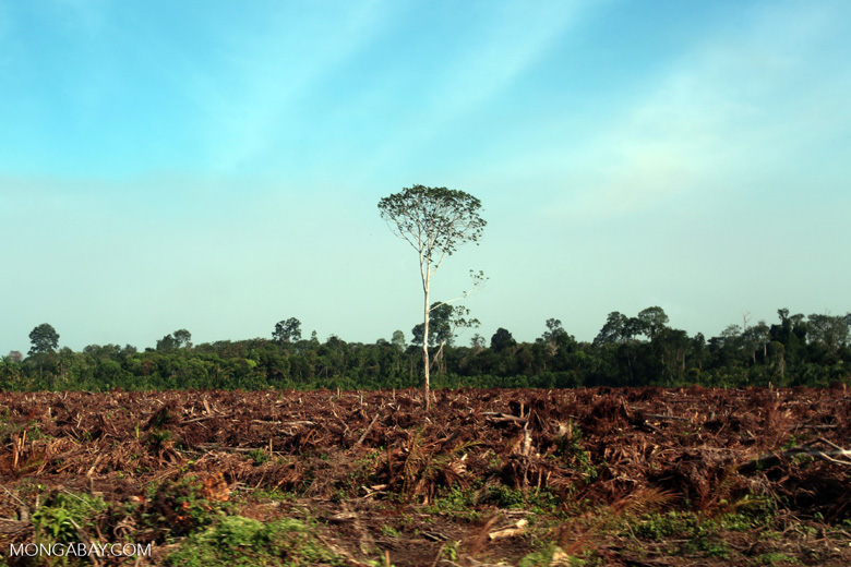 Forest cleared for palm oil production [riau_5924]